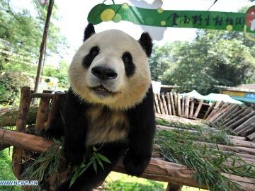 Osa Panda Sijía