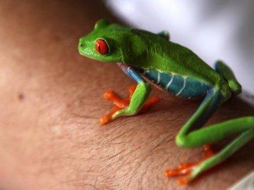La venta de animales exóticos el negocio de Nicaragua