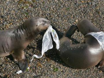 El Día Internacional sin bolsas de plástico
