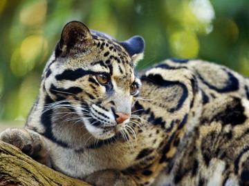La ciencia hace un llamamiento para frenar la desaparición de la fauna salvaje