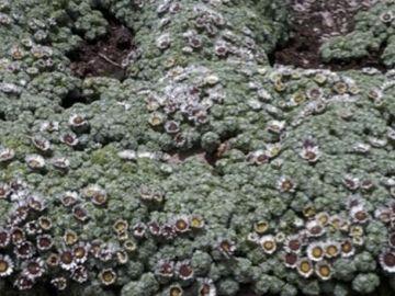El grupo de botánica de la Universidad CEU descubre una nueva especie vegetal en Perú