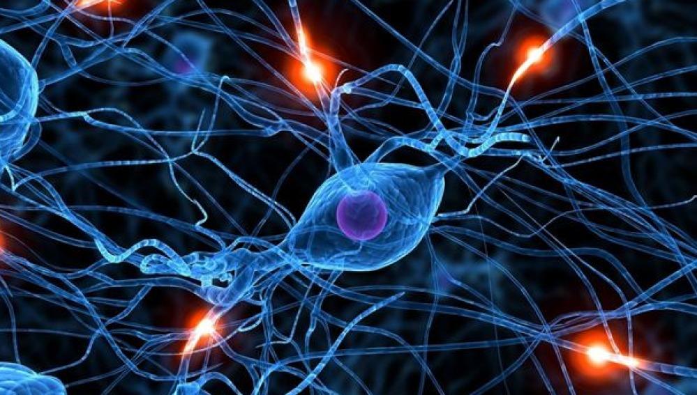 Investigan las conexiones cerebrales para tratar el alzhéimer