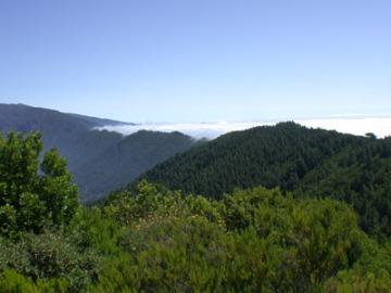 La flora más rica y variada de Europa está en Canarias