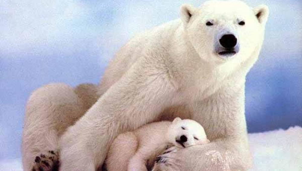 Canadá, el principal enemigo de las especies en peligro de extinción