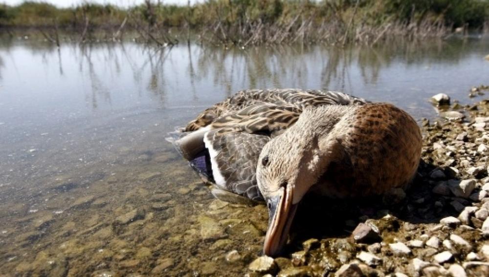 Aumenta el número de muertes en masa de aves y peces