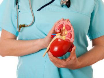 Investigadores descubren la eficacia de trasplantar riñones embrionarios descongelados