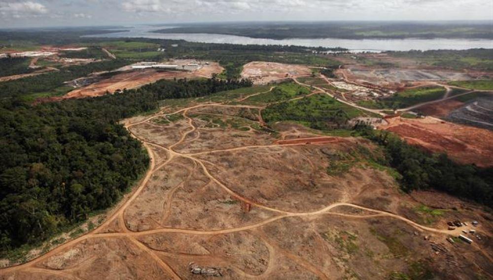 Identifican a 500 instituciones que pueden acabar con la deforestación