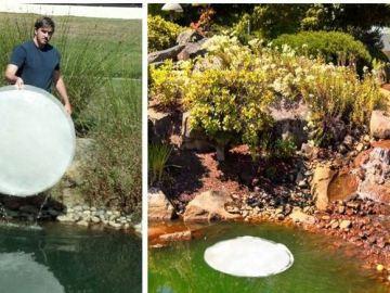 Las hojas de nenúfar artificiales son capaces de purificar un río