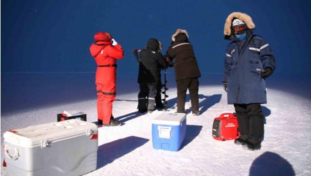 Descubren que las bacterias en el Ártico se alumbran para sobrevivir a la oscuridad de la noche