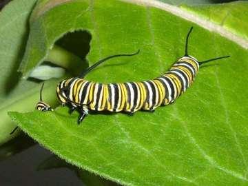 ¿Sabías que los insectos herbívoros influyen en el cambio climático?