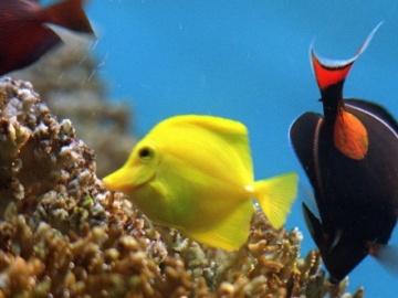 Reducen a casi 230.000 las especies marinas reconocidas