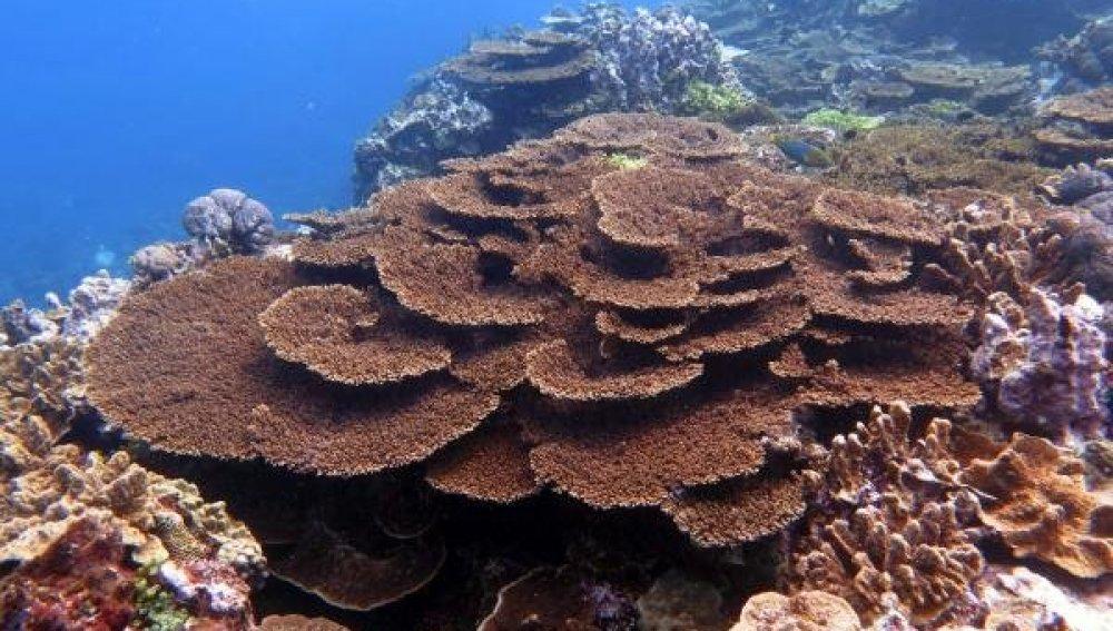 Piden más apoyos para salvar la Gran Barrera Coral de Australia