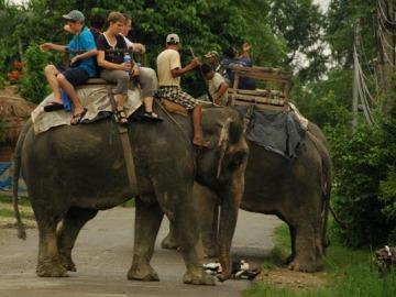 Turismo con animales en Tailandia