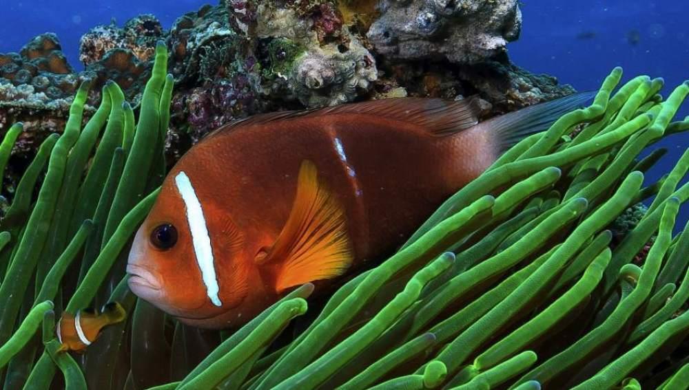 El calentamiento global afecta al crecimiento de los peces