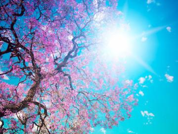 Superficie arbórea a la luz del sol