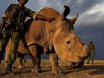 ¿La imprensión en 3D podría salvar a los rinocerontes?