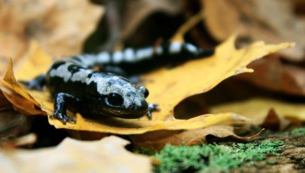 Una de cada seis especies podría extinguirse