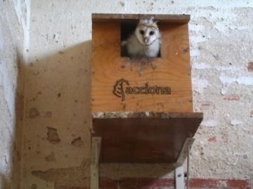 100 crías de rapaces de especies protegidas nacen en casetas-nido artesanales