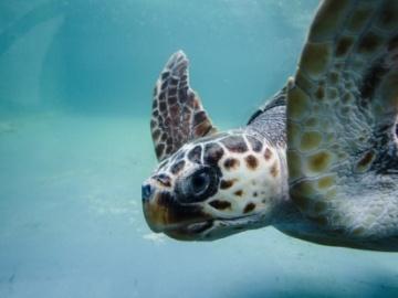 La 'lista patrón'de 12.000 de especies marinas se espera que esté lista para finales de año