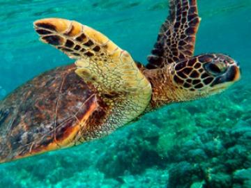Animales marinos en peligro de extinción