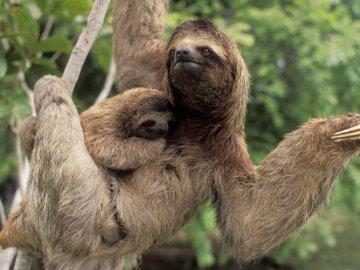 Un estudio demuestra que ser perezoso puede ser una ventaja evolutiva