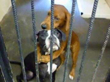 Dos perros que iban a ser sacrificados se salvan gracias a una foto suya abrazados