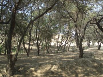 Sequía en los bosques