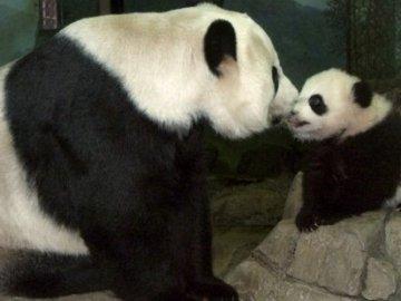 Mei Xiang con su primera cría