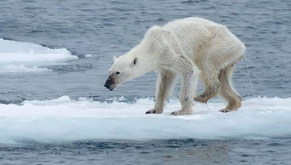 Las imágenes que muestran la destrucción de la biodiversidad