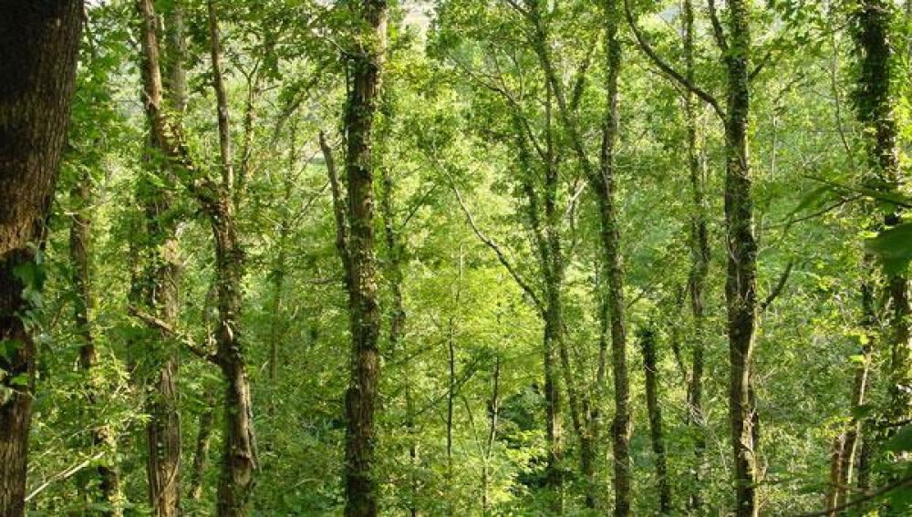 La Tierra perdió en 25 años una superficie de bosques del tamaño de Sudáfrica