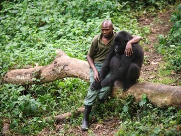 Un hombre consuela a un gorila después de que unos cazadores mataran a su madre
