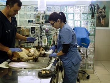 Dos veterinarios en una clínica