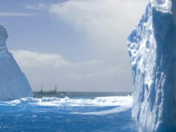 Una empresa de Japón recibe una multa por cazar ballenas en la Antártida