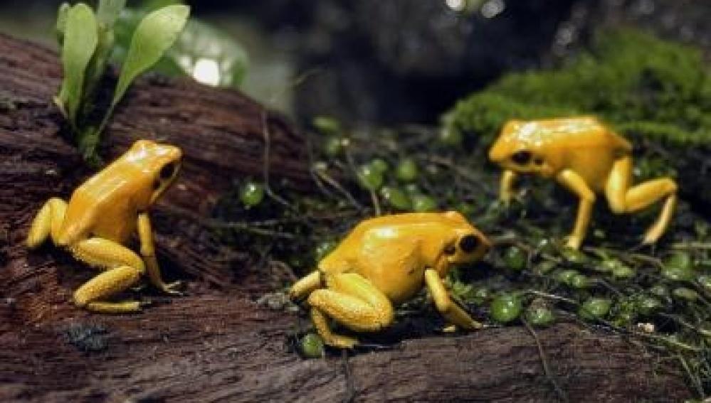 Brasil divulga un inventario de su fauna con 116.000 especies