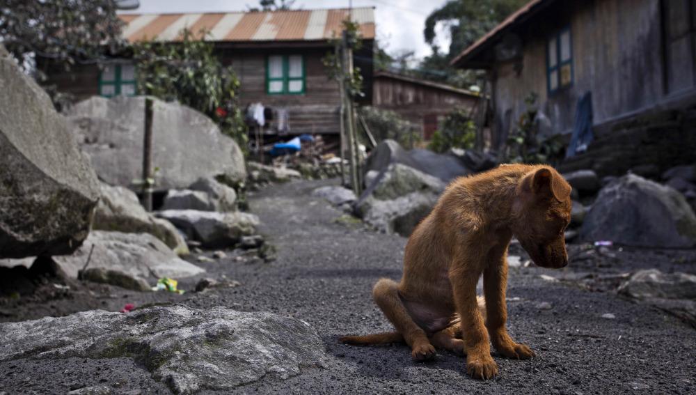 Las personas con problemas económicos se ven en la obligación de dejar a sus mascotas en refugios