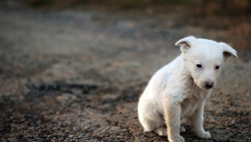 El abandono de animales, la otra cara de la festividad de San Antón