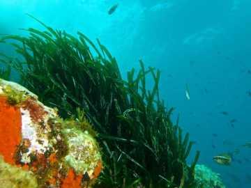 Ecosistema del Mediterráneo