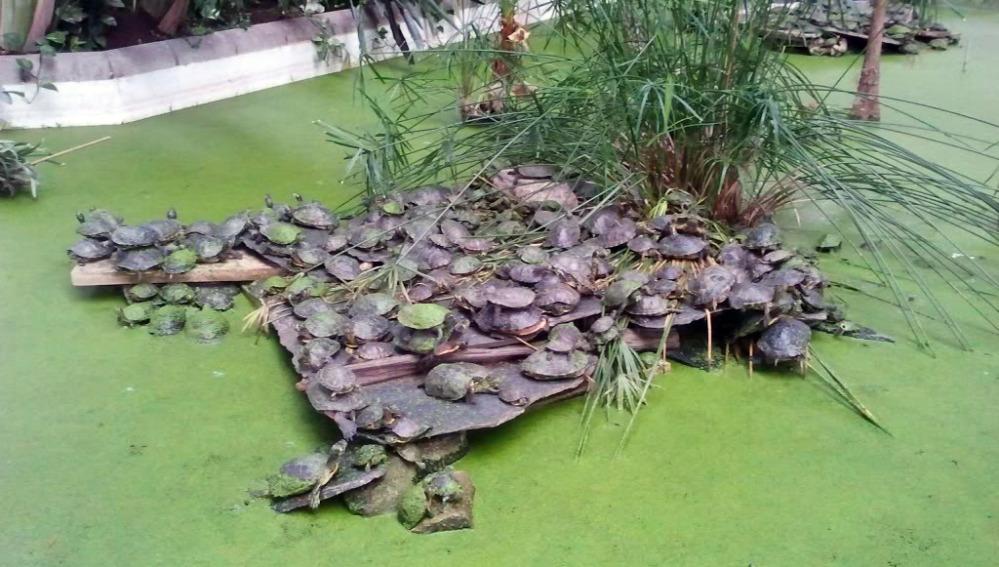 Tortugas en el estanque de la estación de Atocha