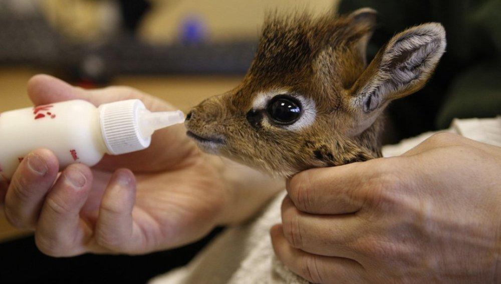 El zoo de Barcelona denunciado por sacrificar animales recién nacidos