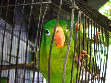 Costa Rica lanza una campaña contra el cautiverio y la caza de animales silvestres