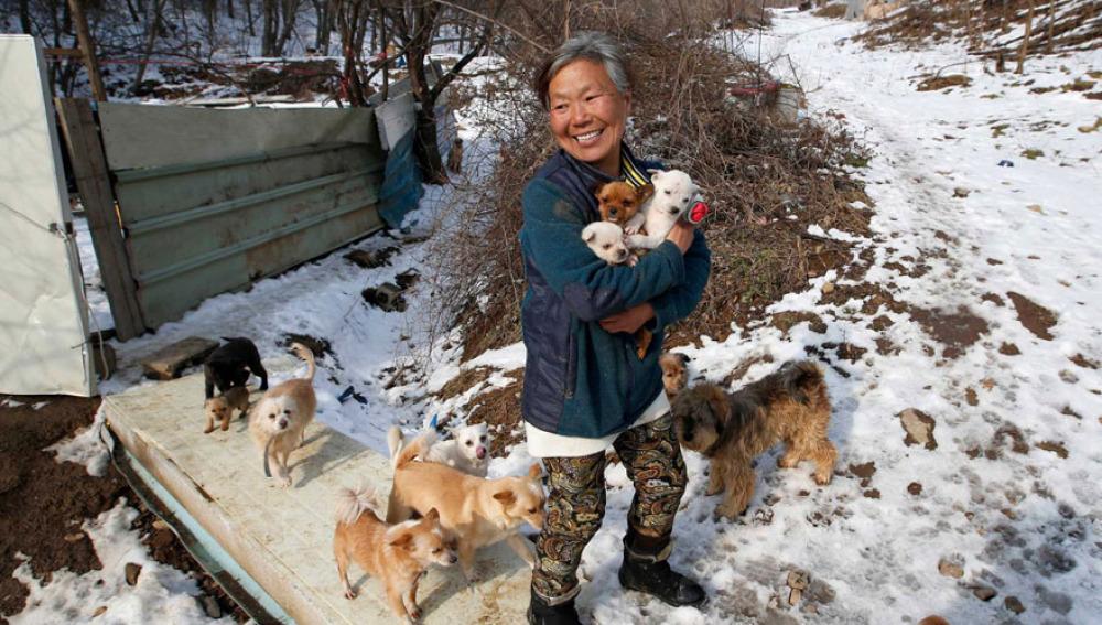 Una mujer rescata a 200 perros que iban a ser vendidos como comida
