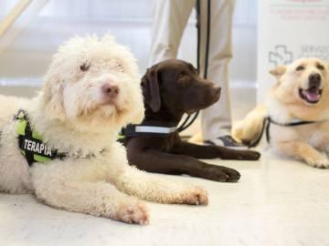 Tres perros participarán en una terpia pionera para ayudar a niños con autismo o daño cerebral