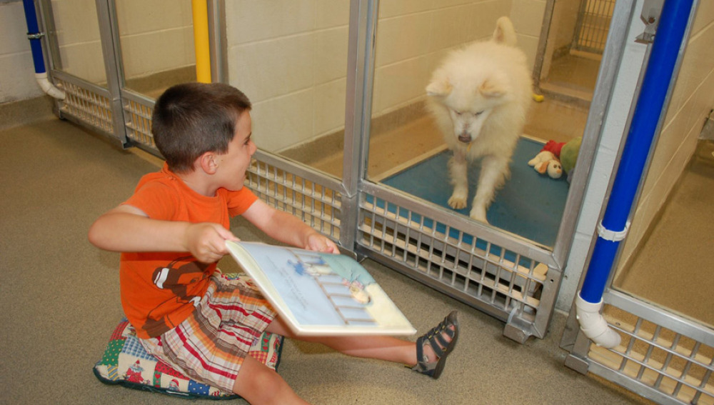 Unos niños leen cuentos a perros sin hogar para que se acostumbren a la vida en familia