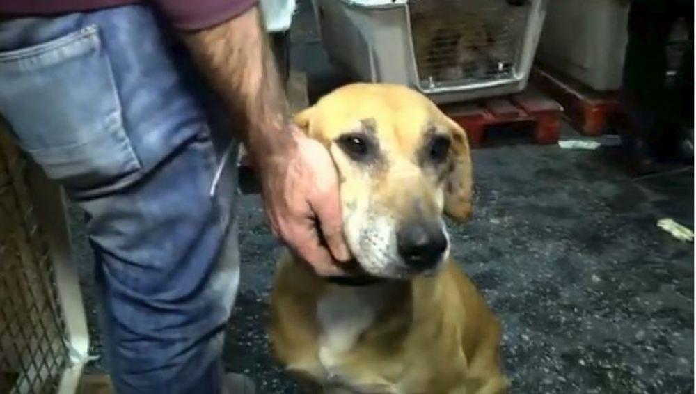 Una mujer no podía elegir qué perro adoptar y decidió comprar todo el refugio