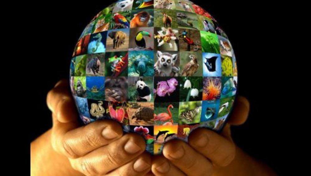 El futuro de la vida silvestre está en nuestras manos