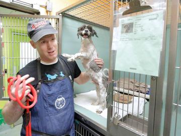 Corte de pelo a los perros más mayores del refugio para ayudarles a encontrar un nuevo hogar