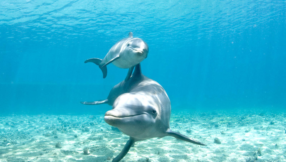 Una hembra de delfín con su cría