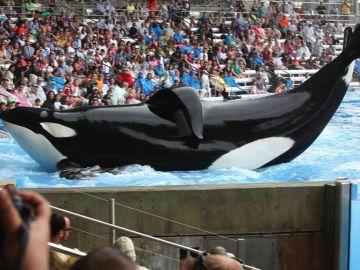 La orca Tilikum de 'Blackfish' en estado crítico
