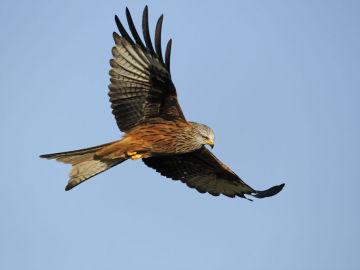 Un ave sobrevuela el Parque Nacional de Monfragüe