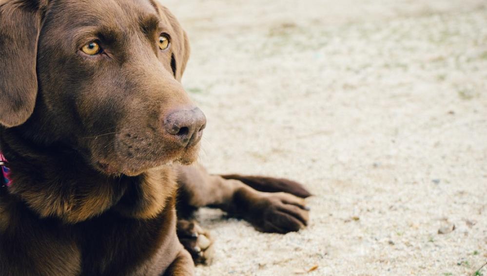 Un perro en la playa